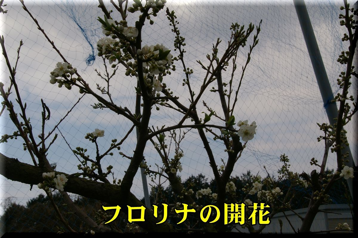 1frolina170405_025.jpg
