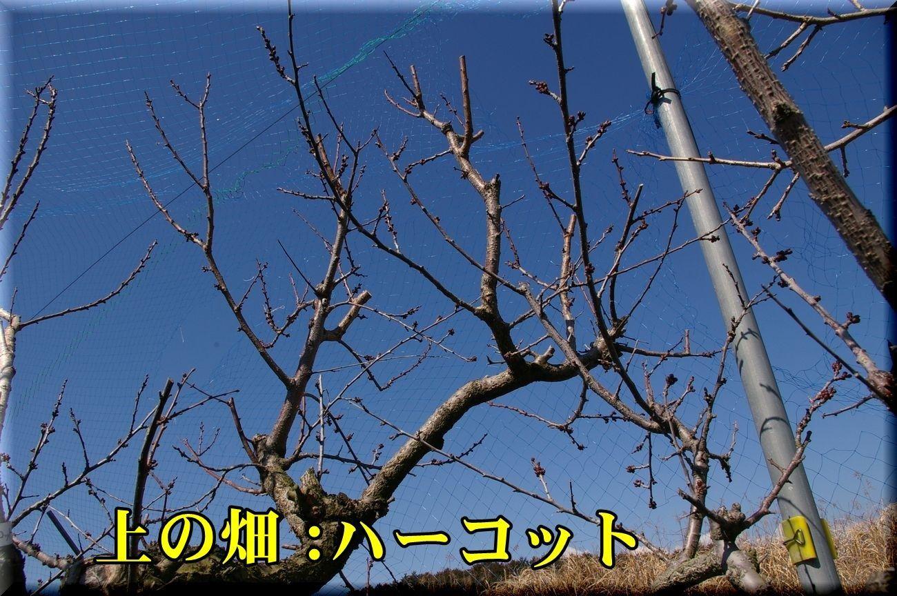 1harcot170316_021.jpg
