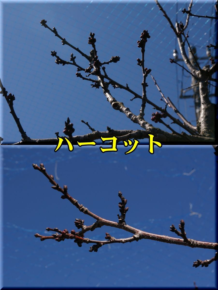 1harcot170316_022.jpg
