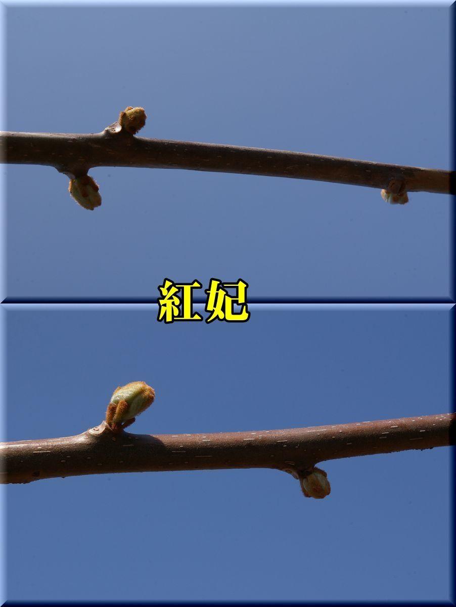 1kouhi170328_006.jpg