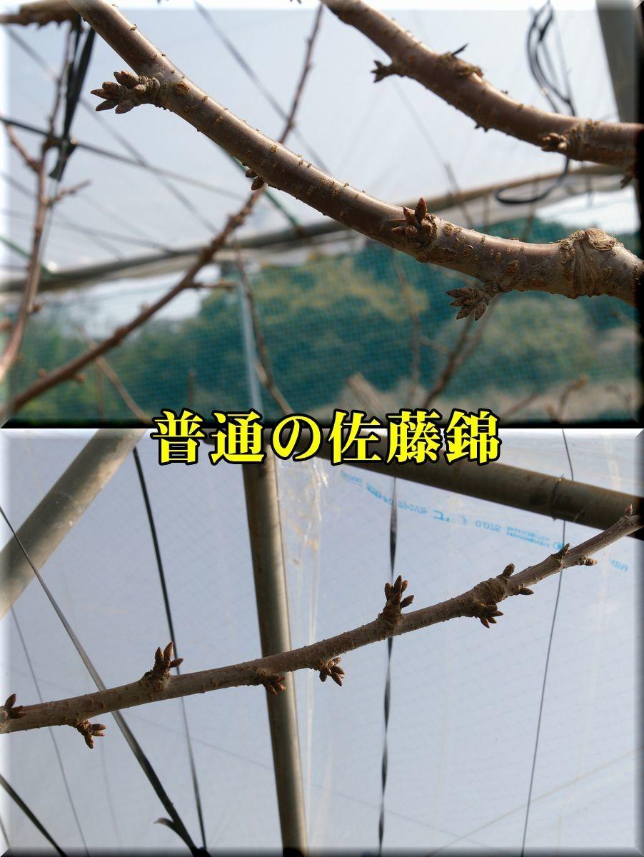 1satou170404_041.jpg