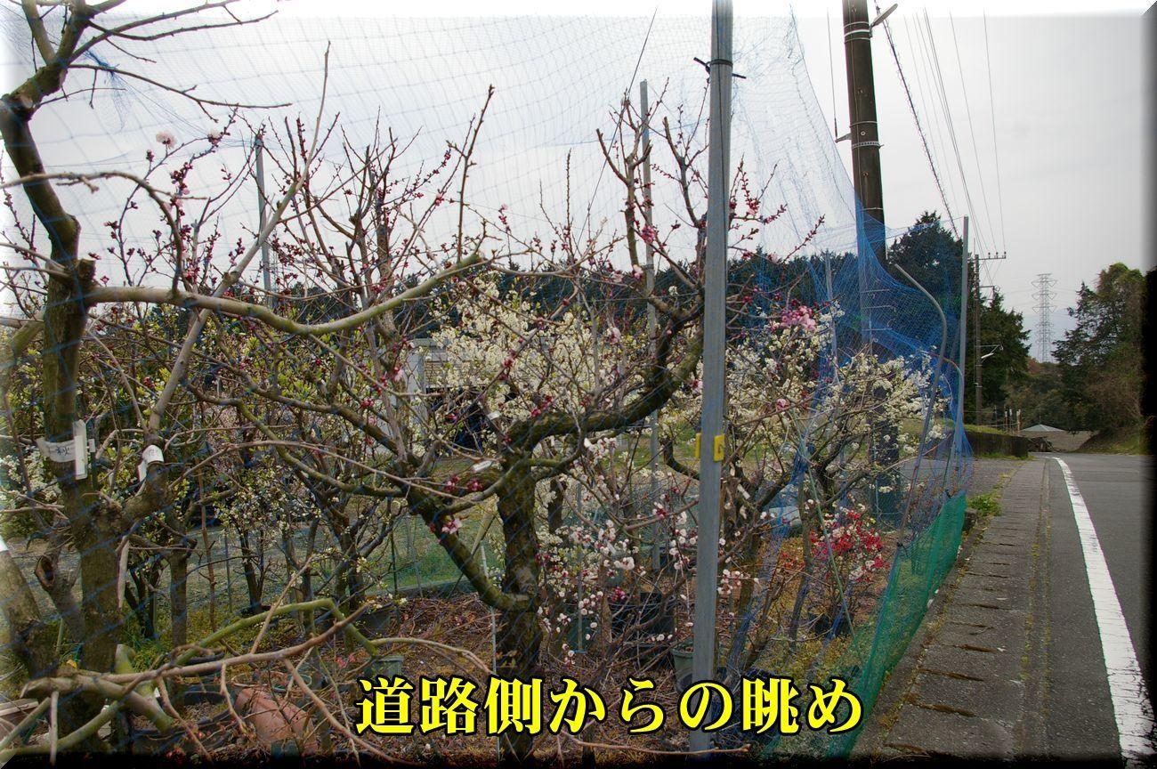 1sotokara_170331_031.jpg