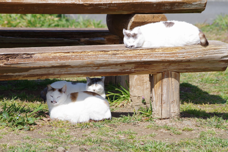 陽だまり猫三兄弟