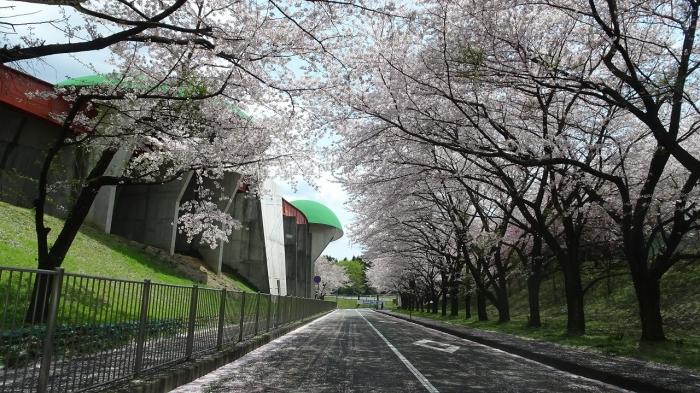 養老の滝と桜 (10)