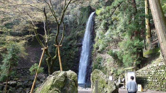 養老の滝と桜 (1)