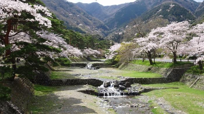 養老の滝と桜 (6)