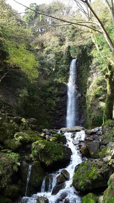 養老の滝と桜 (2)