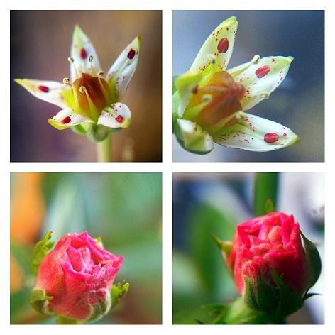 花のコラージュNo1