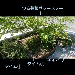PhotoGrid_1492942788137.jpg