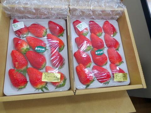 008美味しいイチゴ