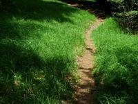 path-167508_960_720_convert_20170301083743.jpg