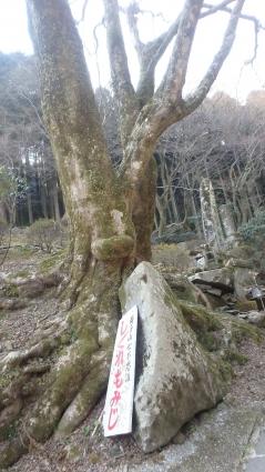 国東半島(両子山・中山仙境・熊野磨崖仏) 065