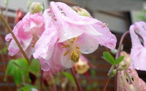 庭の山野草 006-001