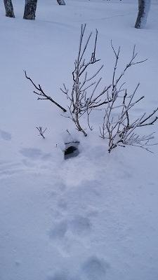 藻琴山銀嶺水沢うさぎの巣