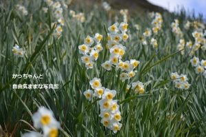 DSC_4723.jpg