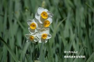 DSC_4727.jpg
