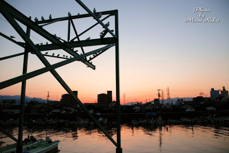 西条漁港にて 西条市新堀下