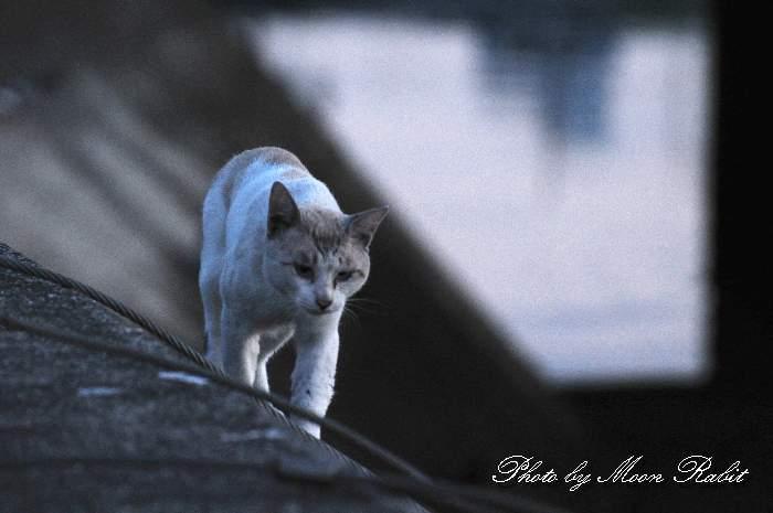 野良猫 西条漁港 愛媛県西条市北浜南