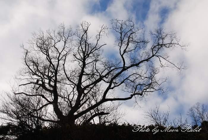 瓶ヶ森の枯れ木 愛媛県西条市