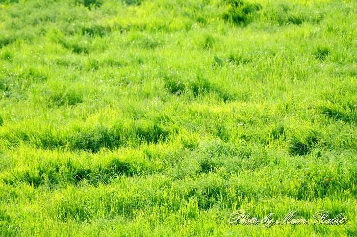 草木 東予運動公園 愛媛県西条市河原津新田 4月の植物