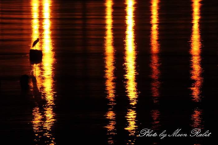 夜の野鳥 愛媛県西条市船屋