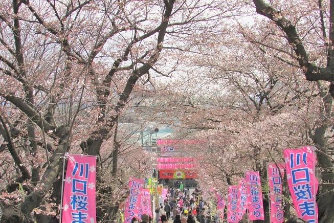 kawagutisakura170402-107.jpg