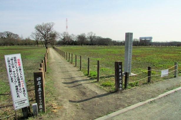 sakurasou170312-115.jpg