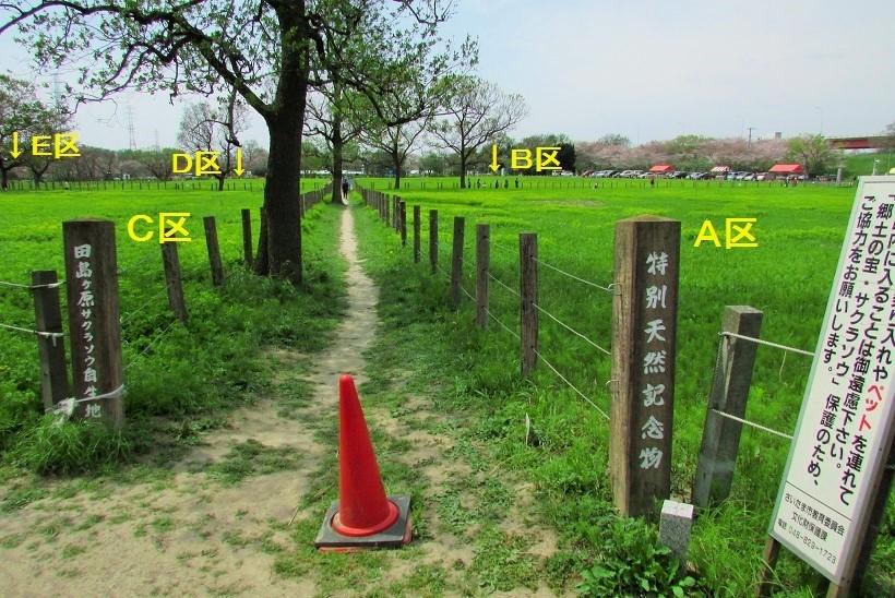 sakurasou170415-111.jpg