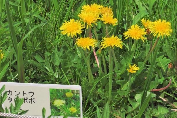 sakurasou170415-115.jpg