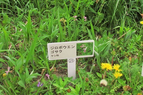 sakurasou170415-116.jpg