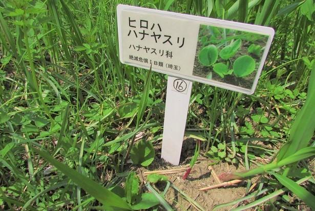 sakurasou170415-129.jpg