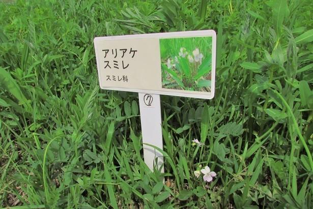 sakurasou170415-133.jpg