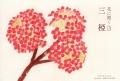 花に聞く13三椏DM