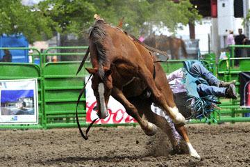 blog (6x4@300) Yoko 118 Livermore Rodeo, Bareback Bronco 5, Anthony Lewis (NS) 2_DSC7009-6.11.16.(3).jpg