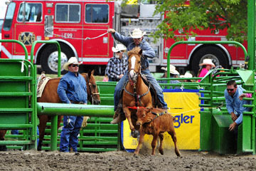 blog (6x4@300) Yoko 118 Livermore Rodeo, Tie-Down 9, Wes Lockard (8.8 Atascadero, CA) 2_DSC7120-6.11.16.(3).jpg