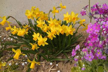 blog CP10 Garden flowers_DSCN4096-3.9.17.jpg