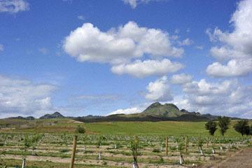 blog 28 Bear Valley via Williams_DSC6464-4.14.16.jpg