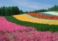 flower-back1445.jpg