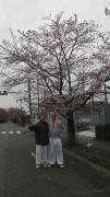 富岡の桜-5