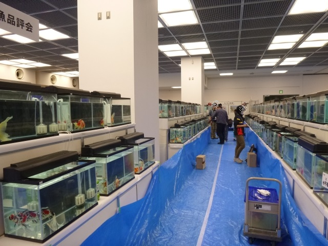 日本鑑賞魚フェア