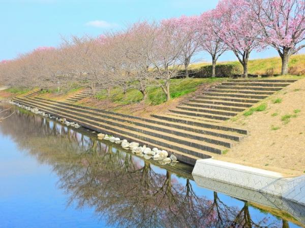 1赤坂泉17.04.02