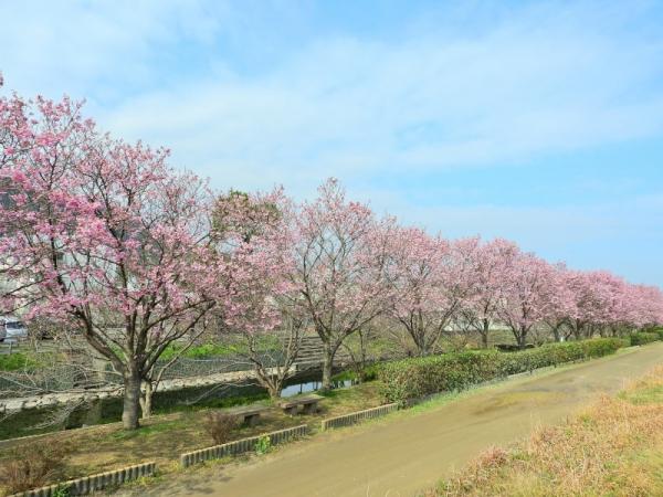 2赤坂泉17.04.02