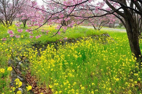 3茶堂公園17.04.02