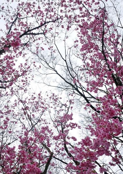 4茶堂公園17.04.02