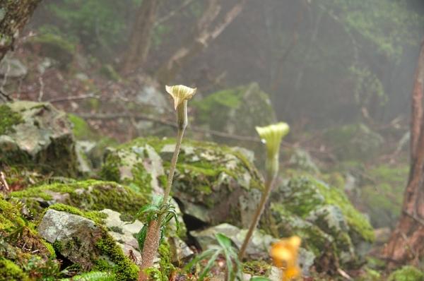 7篠山17.04.25