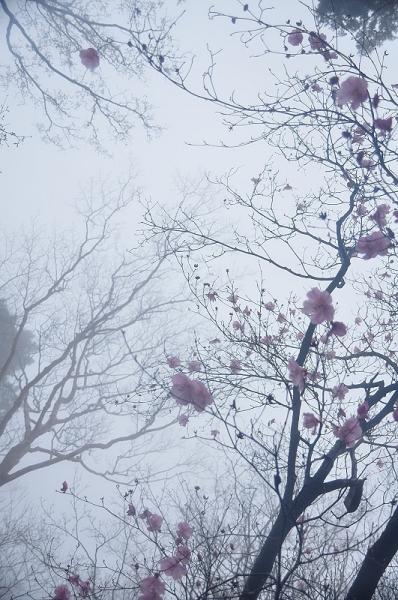 8篠山17.04.25