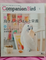 companion bird