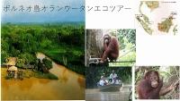 ecotour.jpg