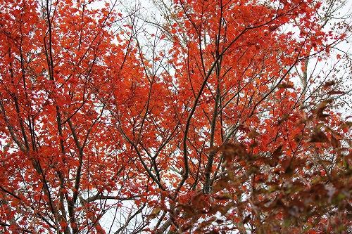 20161113えびの池巡り(6)紅葉2