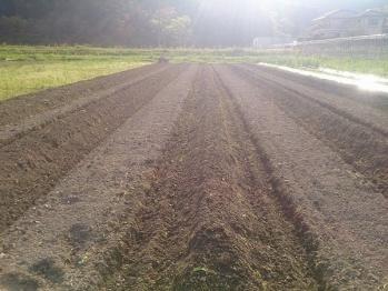 畝立てした畑
